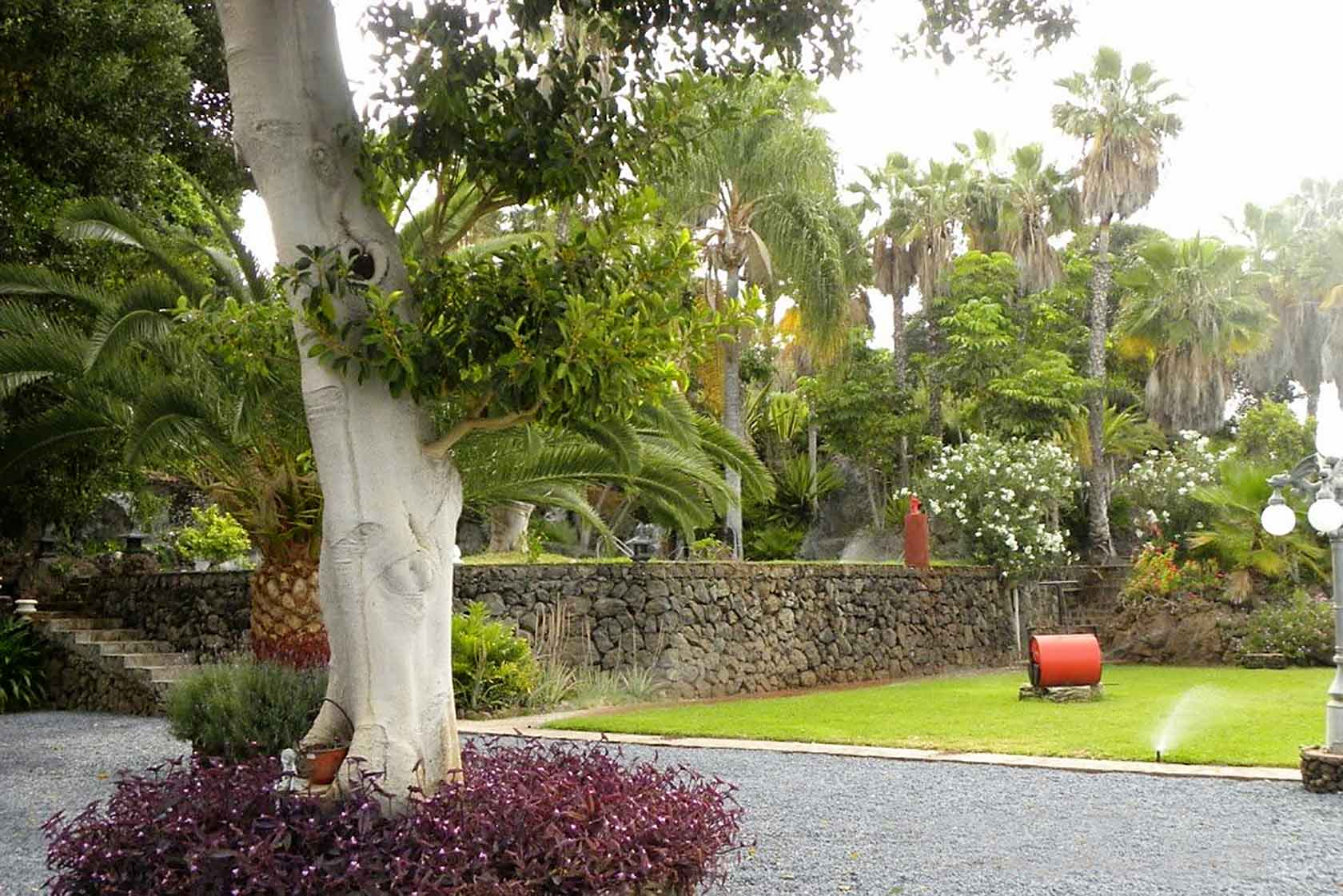 Finca Las Damas in Playa San Juan: Garden